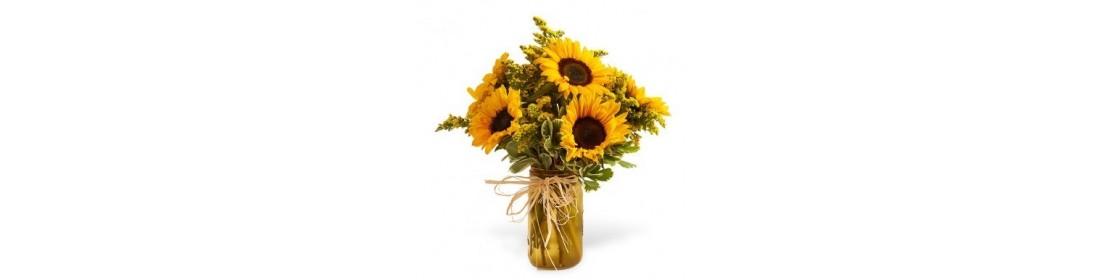 Flower Sunflowers