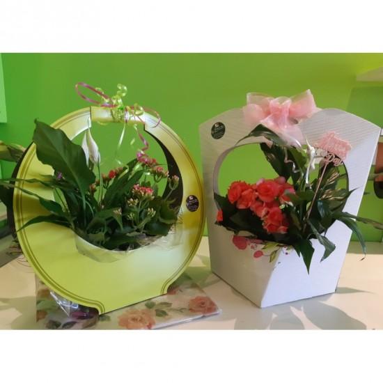 Duo de plantes